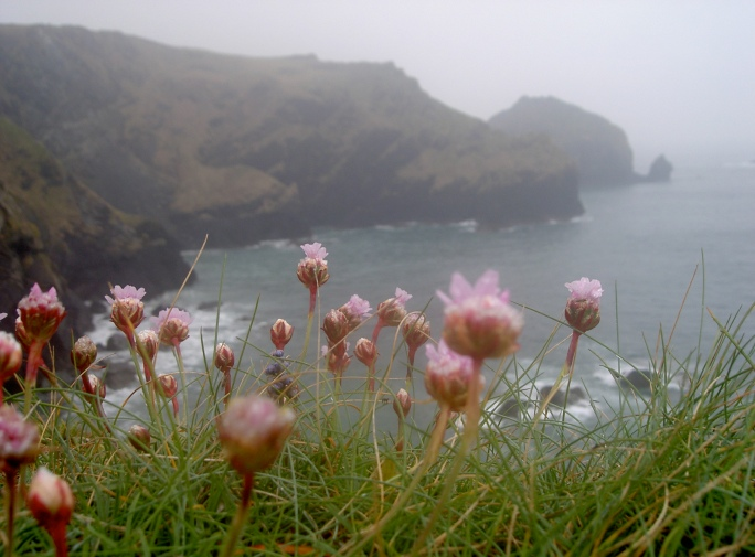Cadgwith flowers